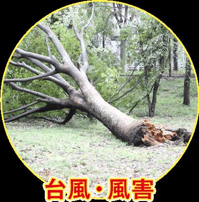 台風・風害